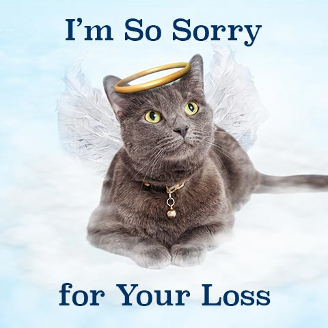 A multimodal sympathy card on the death of a cat